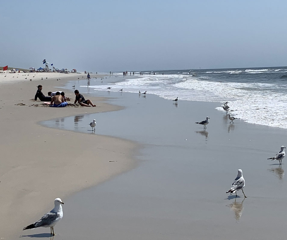 Jones Beach with people and sea gulls