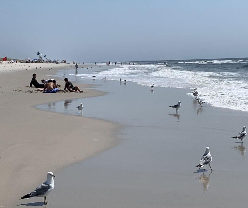 Jones Beach with people and sea gulls